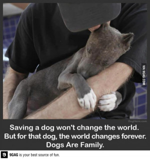 Dogs are family. Period.