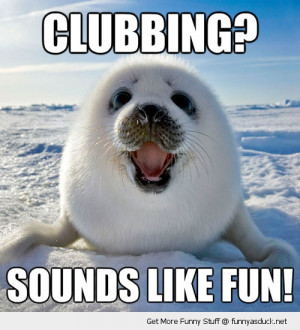 clubbing sounds like fun seal pup animal funny pics pictures pic ...