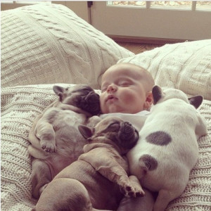 Cute animal pictures: Baby sleeping with puppies.