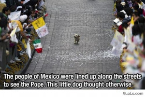 mexican quotes and sayings funny little dog in mexico