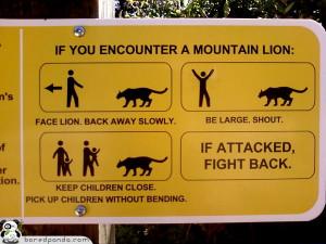 55 Funniest Signs Around the World