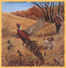 ... our bird hunting guides are some of the most experienced in Alberta