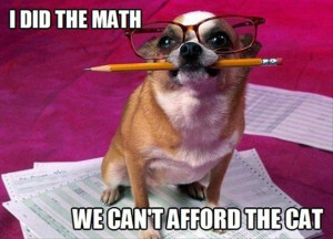 funny dogs does the math, no cats