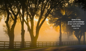 Golden hour of sunlight with fog along a fence line on a farm in ...