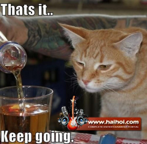 Thats it keep going funny alcoholic cat