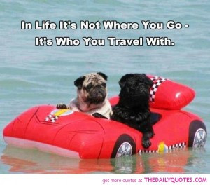 life-who-you-travel-with-quote-cute-funny-animal-dogs-pictures-quotes ...
