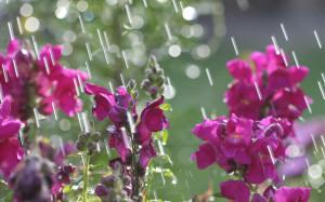 April Showers 2 1920x1200 wallpaper download page 540064