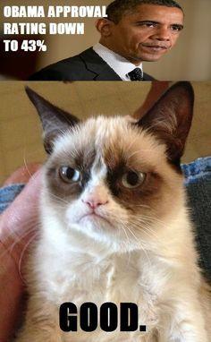 ... , Guns Control, Funny Stuff, Humor, Cat Facts, Grumpy Cat, Cat Memes