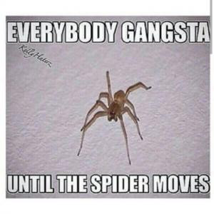 Everybody gangstaUntil the spider moves