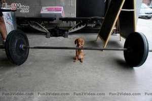 Weight Lifting Quotes Wallpaperfunny Boys And Girls Comedy Wallpapers ...
