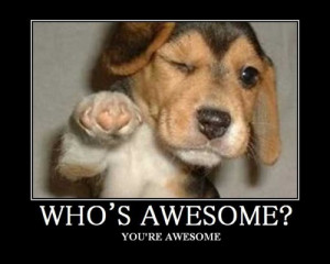 dog, beagle, who's, awesome?, you're, awesome, wink, ;), dog, puppy ...