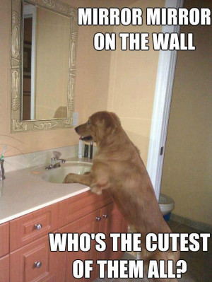 Mirror Mirror On The Wall Quotes Funny Mirror, mirror, on the wall,