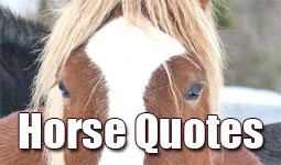 thematizing.comHorse Quotes and Sayings about Riders