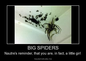 ... : Funny Animals , Funny Pictures // Tags: Big spiders // July, 2013