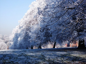 December-Snow-Trees.jpg