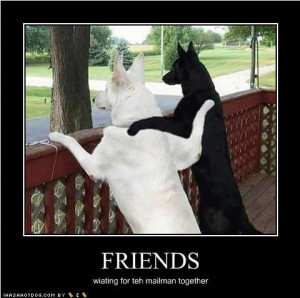 Funny Cat Quotes & Funny Dog Sayings