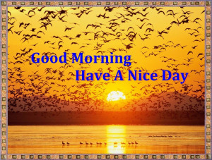 Code for forums: [url=http://www.imgion.com/flying-birds-good-morning ...