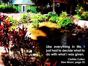 Twilight Series Twilight quotes 41-60