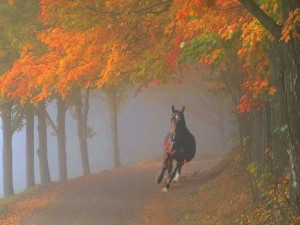 "Horse galloping through foggy fall forest. ""How beautifully leaves ..."