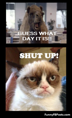 Funny Mad Cat Quotes