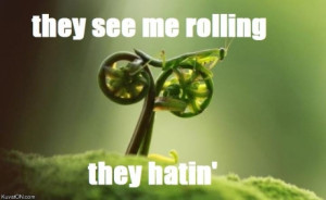 they, see, me, rolling, they, hatin, rollin, grasshopper, leaf