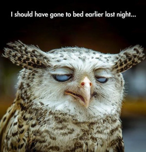 sleepy-owl-hillarious-face-how-i-look-in-the-mornings-funny-picture