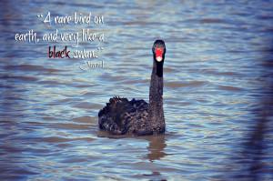 Swans quote #7