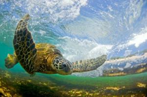 Clark Little Surf Photography Slideshow at evo June 11th