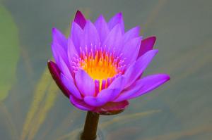 meditación, inteligencia espiritual, meditacion guiada, libros ...
