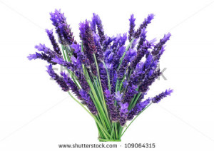 Lavender Flower A bunch of lavender flowers on
