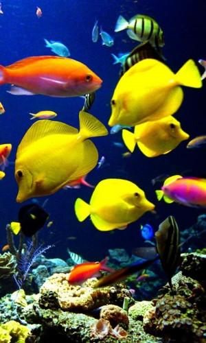 ... fish hook in water desktop wallpaper free wallpapers pictures