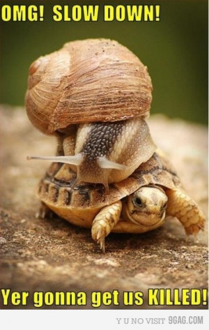 it's funny because snails are slow.