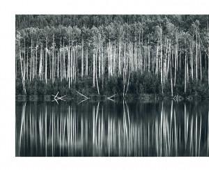 "Still Water"" - Tree Reflections - Photo by John Sexton"