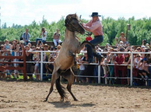 Funny Sports Pictures > Funny Rodeo Pictures