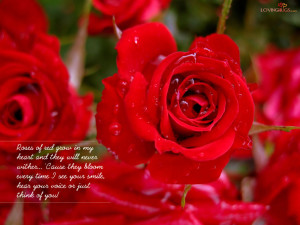 Rose Wallpaper for Love with Quotes