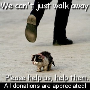 Homeless Animals Quotes