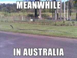 Meanwhile in Australia (63 pics + 2 gifs)