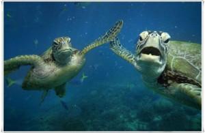 Cute Sea Turtle Family.....