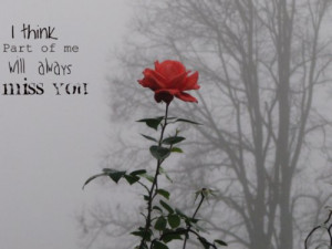 love, missing you, rose, you