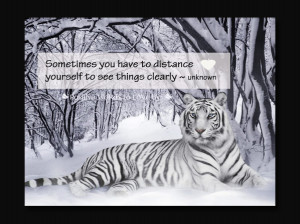 Seeing things Clearly