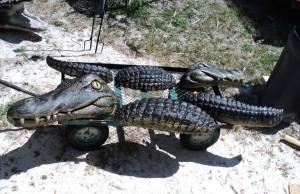 Alligator-wall_003.jpg