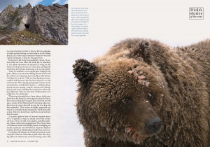 grizzly-bear-hungry-as-a-bear-page-3.jpg