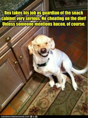 Return to Attack Of The Funny Animals – 42 Pics