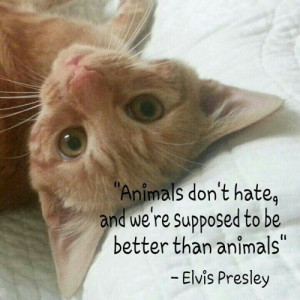 Animals don't hate