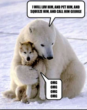 Animal Humor dog & bear funny