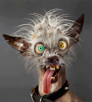 The Ugliest dog in the World - Image
