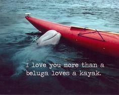 Love you more than a beluga loves a kayak