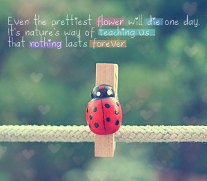 flowers life, love, pretty, quotes, quote, cute, one day