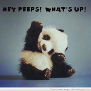 animals, cute, i love pandas, quote, quotes