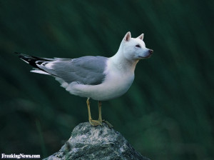 Funny Seagull Pictures